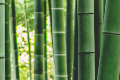 Picture of Oil - Bamboo