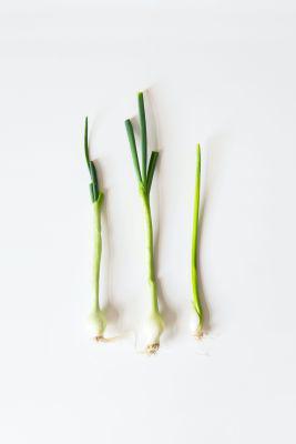Picture of Oil - Lemongrass