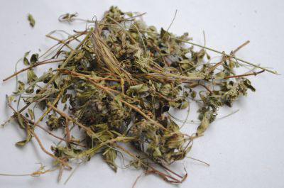 Picture of Oil - Thyme